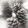 Christmas fir cone — Stockfoto