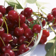 Cherry - 