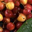 Cherry's pattern — Stock Photo