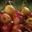 Stock Photo: Cherry's closeup