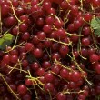 Stock Photo: Red currants pattern
