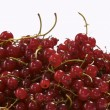 Red currant — Stock Photo #1469868