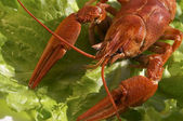 Boiled crawfish — Stock fotografie