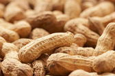 Peanut — Stock Photo