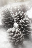 Christmas fir cone — Stock Photo
