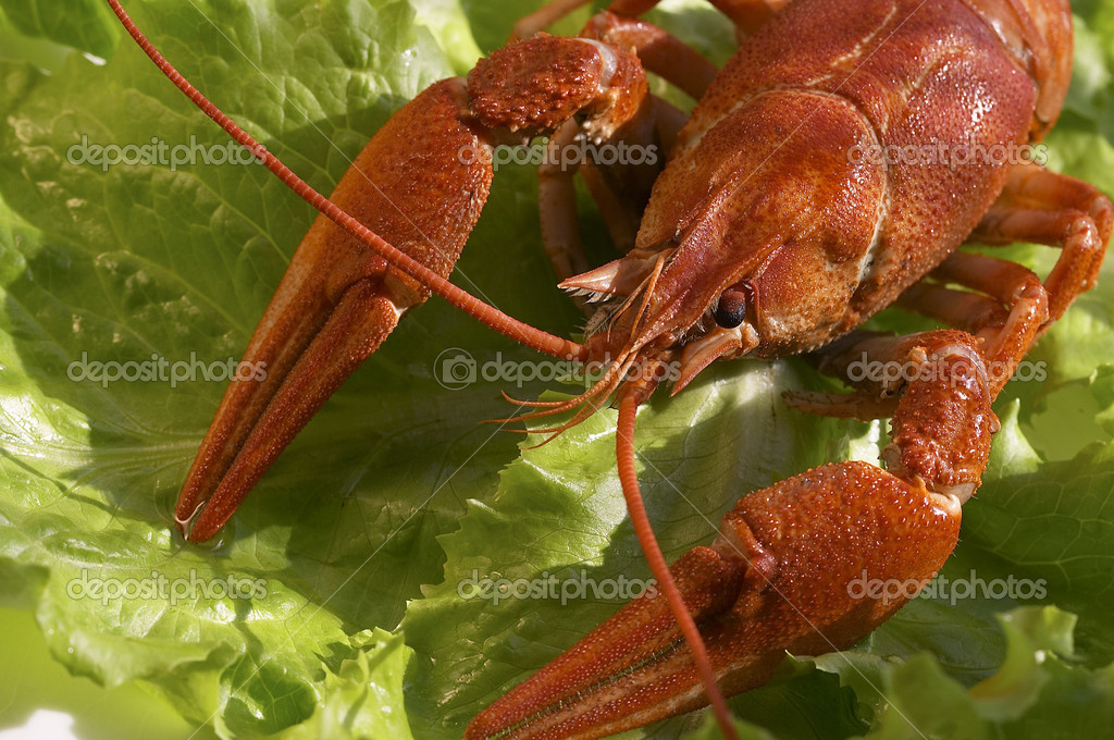 Cooked crawfish on the lettuce — Stock Photo #1463889