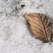 Old leaf — Stock Photo