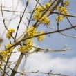 Yellow twig — Stock Photo