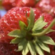 Closeup of strawberry — Stock Photo