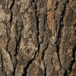 Bark — Stock Photo #1476533