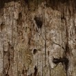 Stockfoto: Old wooden board