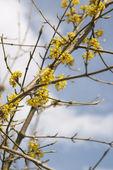 žlutá větvička — Stock fotografie