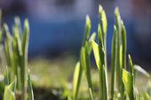 Spring stalk — Stock Photo