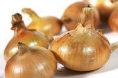 White onion — Stock Photo