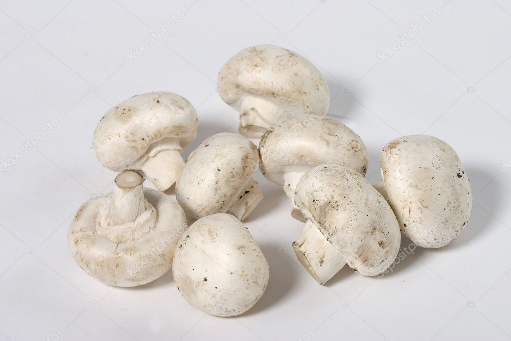 Close up view of field mushroom on the white background — Stock Photo #1478773