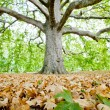 Leaves of plane tree and gravel with big - Stock Photo