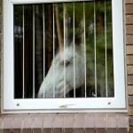 White horse look through the window — Stock Photo #1273556