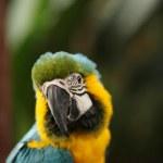 z bliska strzał papuga — Zdjęcie stockowe