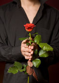Close up of young man with rose in black shirt — Stock Photo