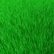 Green grass — Stock Photo #1217690