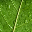 Leaf — Stock Photo #1397400