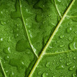 Stock Photo: Leaf