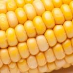 Close-up of fresh corns — Stock Photo #1397488