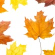 Autumn leaves — Stock Photo #1397698