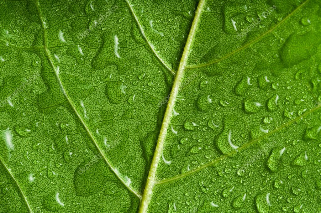Macro of green tree leaf — Stock Photo #1397400
