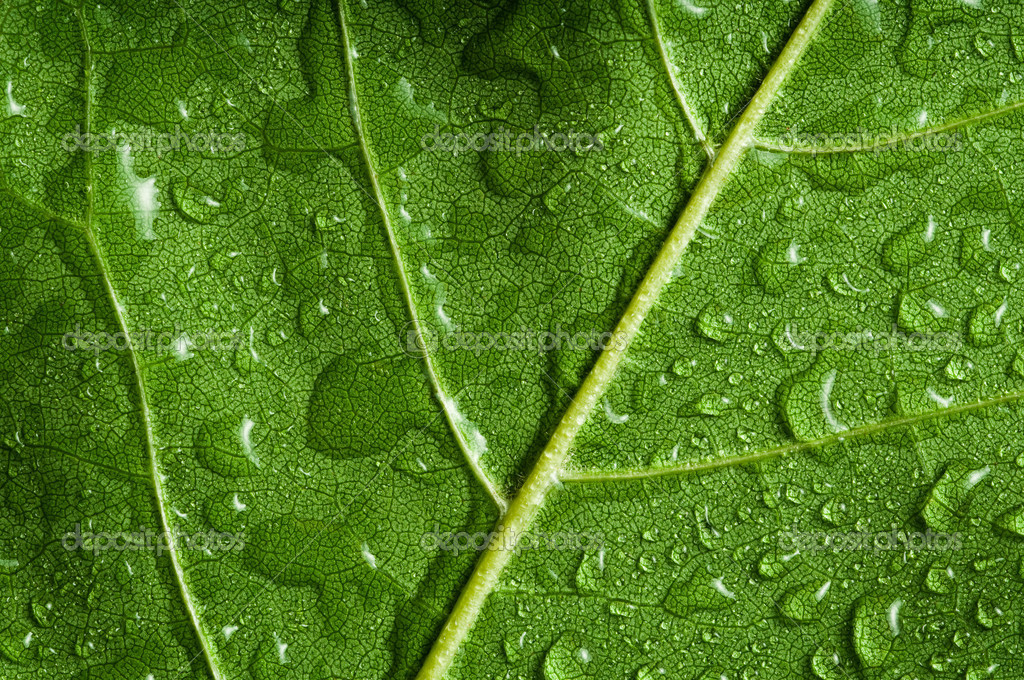Macro of green tree leaf — Stock Photo #1397417