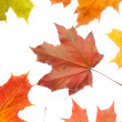 Autumn leaves — Stock Photo #1686248