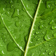 Leaf — Stock Photo #1686252