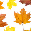 Autumn leaves — Stock Photo #2162170