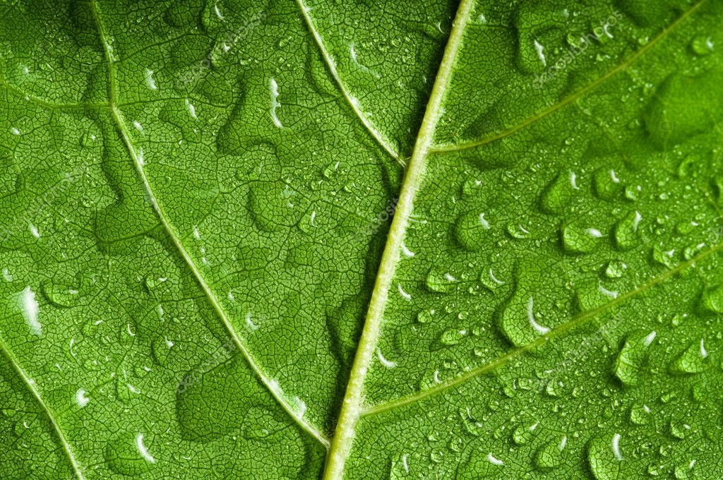 Macro of green tree leaf  Stock Photo #2161945