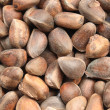 Stock Photo: Siberian cedar nuts