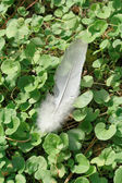 Feather dove of peace over the lawn — Stock Photo