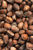 Siberian cedar nuts — Stock Photo