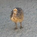 Ostrich — Stock Photo #1410518