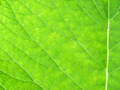 Macro on green foliage. Inula. — Stock Photo
