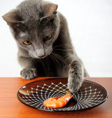 Cat — Stock Photo