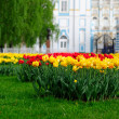 Stock Photo: Tulip garden