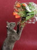 猫 — 图库照片