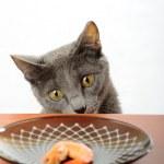 Cat — Stock Photo #1300524