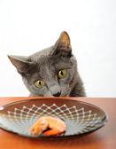 Gato — Foto de Stock