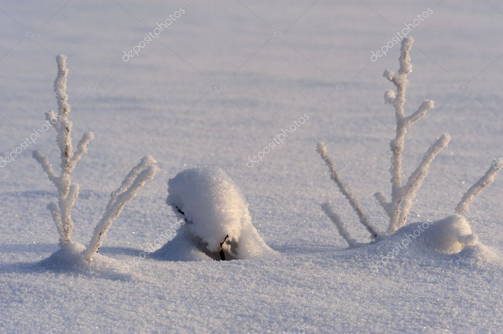 Two small tree covered with snow in winter wood — Stock Photo #1310202