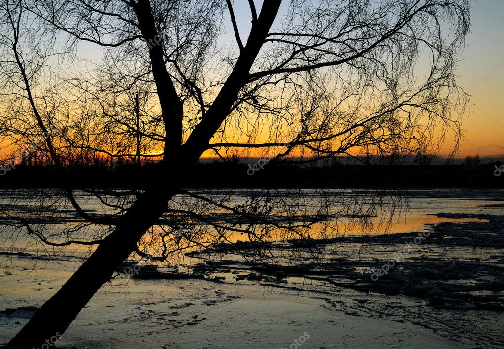 Frozen river and tree against sunset — Stock Photo #1310223