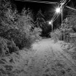 Night winter landscape - Stock Photo