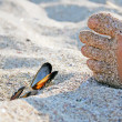 Foot with shells on sand - Stock Photo