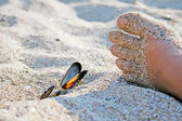 Foot with shells on sand — Stock Photo