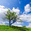 Stock Photo: Lonely tree under cloudy blue sky